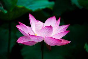 terapia con mindfulness e hipnosis clinica