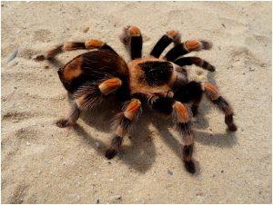 fobia a las aranas